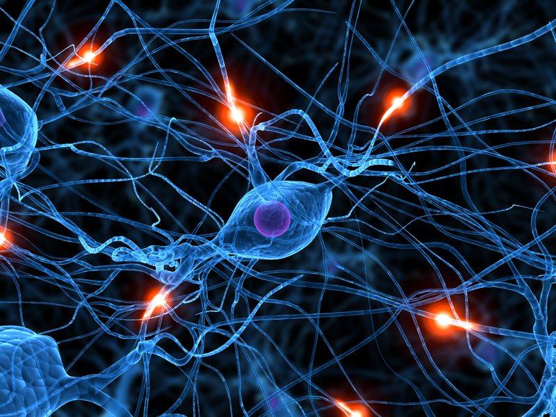 Das Leitbild von personal-point ist durch Gehirnstränge, Neuronen und Synapsen geprägt, welches Informationen wahrnimmt und daraus Pläne und Einschätzungen ableitet.