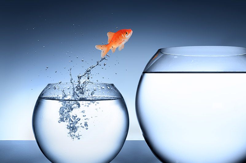 Personal-Point unterstützt Sie als Unternehmensberatung Change Management dabei, von kleineren Gewässern agil wie ein Fisch in größere Gewässer zu springen, welches neue Herausforderungen und eine veränderte Umgebung mit sich bringt.