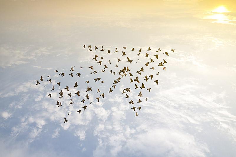 Die Leitbildentwicklung Ihres Unternehmens so gestalten, dass alle Mitarbeiter sich formieren und in ein und dieselbe Richtung fliegen.