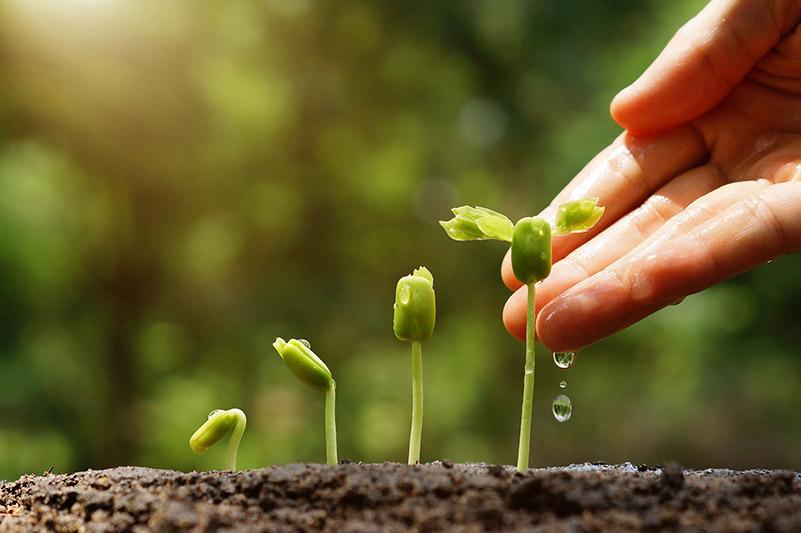 Unsere Assessment-Center unterstützen Sie dabei, Ihre Mitarbeiter unter Berücksichtigung der jeweiligen Potentiale von der Knospe zur vollwertigen Pflanze zu entwickeln.