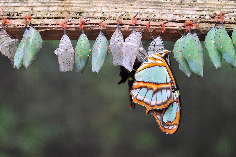 Unser Coaching hilft Ihnen dabei, sich von der Raupe zum Schmetterling zu entfalten. Mit unserer ganzheitlichen Betrachtung unterstützen wir Sie nicht nur im Change Management Coaching, sondern auch mit anderen Coaching-Themen.