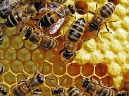 Wissen zu der Kommunikation im Bienenstock im Rahmen der Chef-coacht-Chef Veranstaltungen aufbauen und auf die menschliche Kommunikation übertragen.
